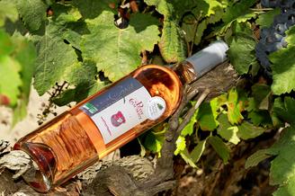 Domaine du Petit Chaumont Aigues Mortes produit des vins Gris de Gris (® NetWorld-Fabrice Chort)