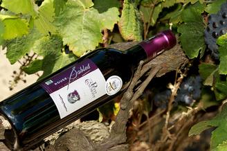 Domaine du petit Chaumont Aigues Mortes produit et élève des vins des sables biologiques en rouge, rosé et blanc.(® networld-fabrice Chort)