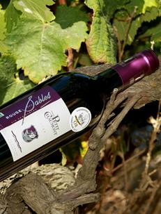 Domaine du petit Chaumont Aigues Mortes produit et élève des vins des sables biologiques en rouge, rosé et blanc.(® saam-fabrice Chort)