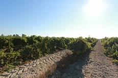 Domaine du Petit Chaumont Aigues Mortes produit des vins de sable bio (® networld-fabrice chort)